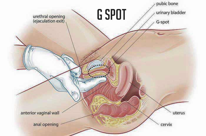 Gynicoplasty of G-spot injection Lebanon